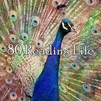 80 Reading Life — Classical Study Music