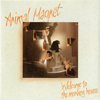 Welcome To The Monkey House — Animal Magnet