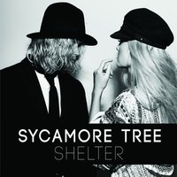 Shelter — Sycamore Tree