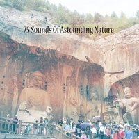 75 Sounds Of Astounding Nature — White Noise Therapy, White Noise Meditation, El Ruido Blanco