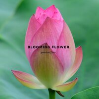 Blooming Flower — passion flow