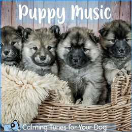 Puppy Music - Calming Tunes for Your Dog — RelaxMyDog, Dog Music Dreams, Pet Music Therapy