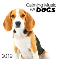 Calming Music for Dogs 2019 - Safe at Home — Dogs Accessories