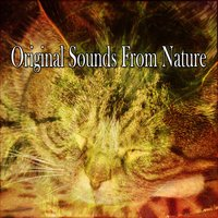 Original Sounds From Nature — Monarch Baby Lullaby Institute