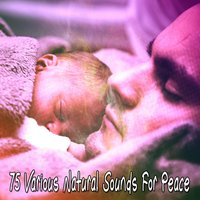 75 Various Natural Sounds For Peace — Nature Recordings