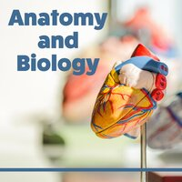 Anatomy and Biology - Learning Together, Best Time to Learn, Interesting Rhythms, Music for Concentration, Focus and Learn — Easy Study Music Chillout