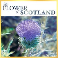 The Flower of Scotland — сборник