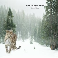 Art of the Hunt — leopard focus