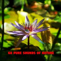 68 Pure Sounds Of Nature — Rain Sounds & White Noise, Rain Sounds, Rain for Deep Sleep