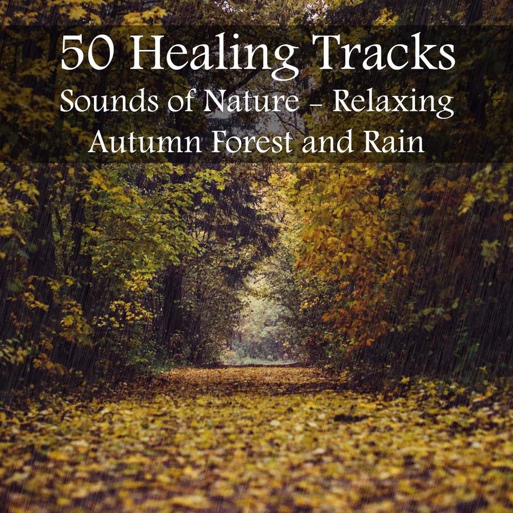 50 Healing Tracks: Sounds of Nature - Relaxing Autumn Forest