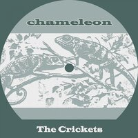 Chameleon — The Crickets
