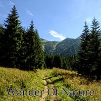 Wonder Of Nature — Nature Sounds Nature Music, Sleep Sounds of Nature, Rest & Relax Nature Sounds Artists