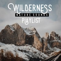 Wilderness nature sound playlist — Echoes of Nature