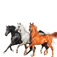 Old Town Road — Lil Nas X, Billy Ray Cyrus, Diplo