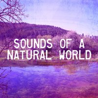 Sounds Of A Natural World — Meditation Spa