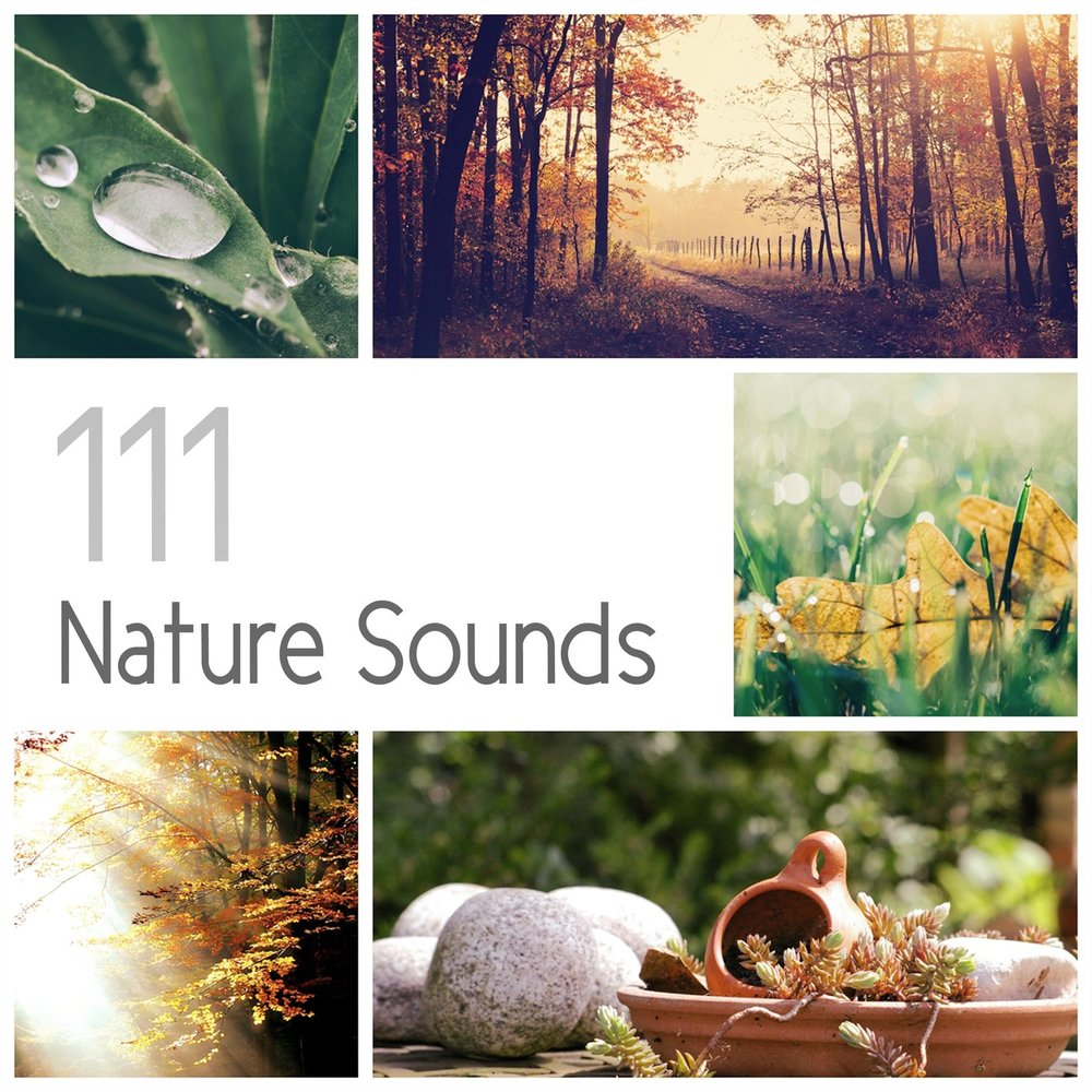 111 Nature Sounds: Over 6 Hours Relaxation Therapy Music for Sleep