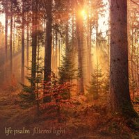 Life Psalm — Filtered Light