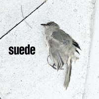 The Invisibles — Suede
