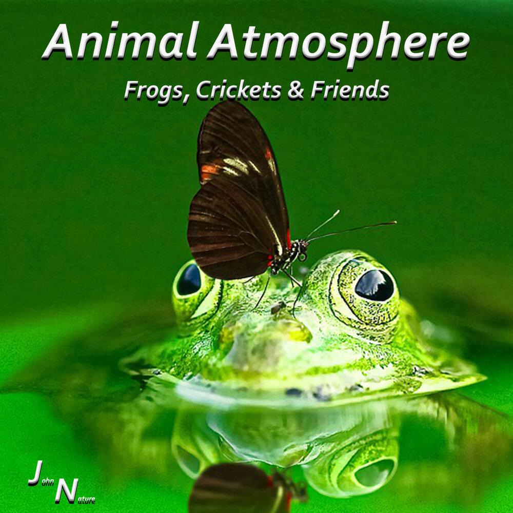 Dyson birds and frogs pdf щетки для пылесоса дайсон dc20