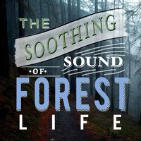 The Soothing Sound of Forest Life — Sounds of Nature for Deep Sleep and Relaxation, Bird Sounds, Sounds of Nature White Noise for Mindfulness, Meditation and Relaxation, Bird Sounds|Sounds of Nature for Deep Sleep and Relaxation|Sounds of Nature White Noise for Mindfulness, Meditation and Relaxation