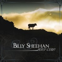 Holy Cow — Billy Sheehan