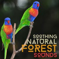 Soothing Natural Forest Sounds — Forest Sounds Relaxing Spa Music Singing Birds
