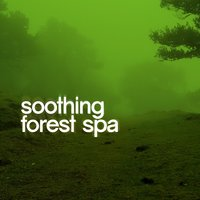 Soothing Forest Spa — Spa Music 2016