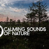 Calming Sounds of Nature — Rest & Relax Nature Sounds Artists, Sleep Music with Nature Sounds Relaxation, Sleep Songs with Nature Sounds, Rest & Relax Nature Sounds Artists|Sleep Music with Nature Sounds Relaxation|Sleep Songs with Nature Sounds