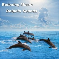 Relaxing Music Dolphin Sounds — Spiritual Moment