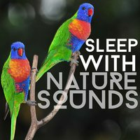 Sleep with Nature Sounds — Nature Sounds for Sleep and Relaxation, Nature Sounds Nature Music, Nature Sounds Sleep, Nature Sounds for Sleep and Relaxation|Nature Sounds Nature Music|Nature Sounds Sleep