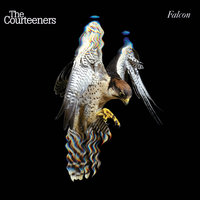 Falcon — The Courteeners