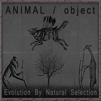 Evolution by Natural Selection — Animal / Object