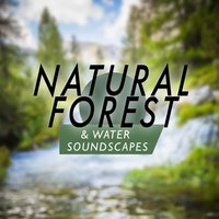 Natural Forest and Water Soundscapes — Outside Broadcast Recordings, Natural Forest Sounds, Soundscapes!, Sleep Music with Nature Sounds Relaxation, Sleep Music with Nature Sounds Relaxation|Natural Forest Sounds|Soundscapes!