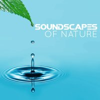Soundscapes of Nature — Sounds of Nature!