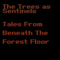 Tales from Beneath the Forest Floor — The Trees As Sentinels