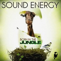 Born in the Jungle — Sound Energy