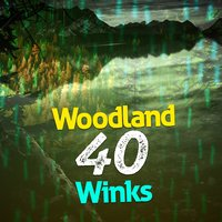 Woodland: 40 Winks — Nature Sounds Sleep