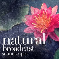 Natural Broadcast Soundscapes — Outside Broadcast Recordings