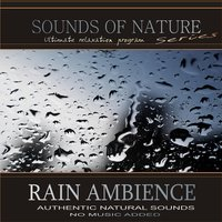 Rain Ambience — Relaxing Sounds of Nature