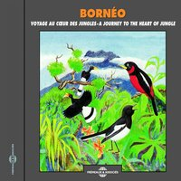 Bornéo, Voyage au coeur des jungles - Soundscapes, a Journey to the Heart of Jungle — Jean-Pierre Picot