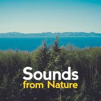 Sounds from Nature — Звуки природы