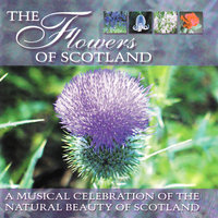 The Flowers Of Scotland — The Scottish Fiddle Orchestra