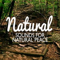 Natural Sounds for Natural Peace — Nature Sounds Nature Music