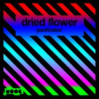 Pacificator — Dried Flower