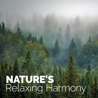 Nature's Relaxing Harmony — Ambiance Nature