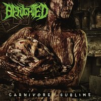 Carnivore sublime — Benighted
