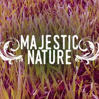 Majestic Nature — Natural Sounds, Nature Sound Collection, Sleep Sounds of Nature, Natural Sounds|Nature Sound Collection|Sleep Sounds of Nature