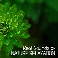 Real Sounds of Nature Relaxation — Sounds of Nature Relaxation