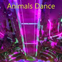 Animals Dance — Jerry Loco