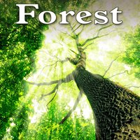 Forest - Sounds of Nature — Звуки природы